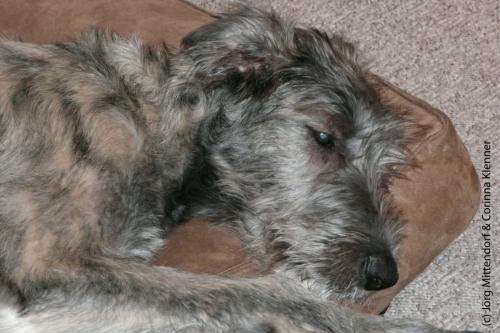 13. November 2009